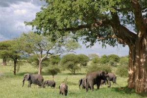 Guide en Afrique, les célèbres pays africains à découvrir