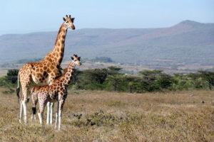 Découvrir des endroits exceptionnels lors d'un circuit au Kenya